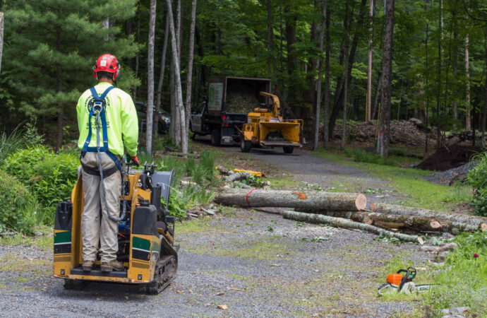 Emergency Tree Removal-Lithia FL Tree Trimming and Stump Grinding Services-We Offer Tree Trimming Services, Tree Removal, Tree Pruning, Tree Cutting, Residential and Commercial Tree Trimming Services, Storm Damage, Emergency Tree Removal, Land Clearing, Tree Companies, Tree Care Service, Stump Grinding, and we're the Best Tree Trimming Company Near You Guaranteed!