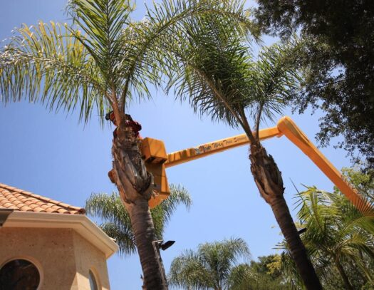 Palm Tree Trimming-Lithia FL Tree Trimming and Stump Grinding Services-We Offer Tree Trimming Services, Tree Removal, Tree Pruning, Tree Cutting, Residential and Commercial Tree Trimming Services, Storm Damage, Emergency Tree Removal, Land Clearing, Tree Companies, Tree Care Service, Stump Grinding, and we're the Best Tree Trimming Company Near You Guaranteed!