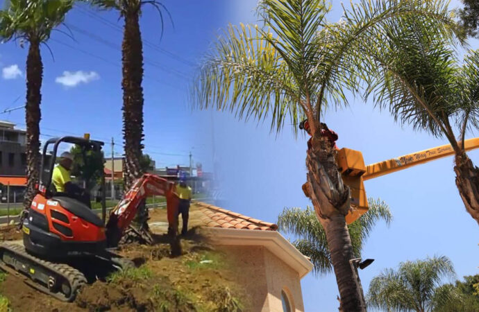 Palm tree trimming & palm tree removal-Lithia FL Tree Trimming and Stump Grinding Services-We Offer Tree Trimming Services, Tree Removal, Tree Pruning, Tree Cutting, Residential and Commercial Tree Trimming Services, Storm Damage, Emergency Tree Removal, Land Clearing, Tree Companies, Tree Care Service, Stump Grinding, and we're the Best Tree Trimming Company Near You Guaranteed!