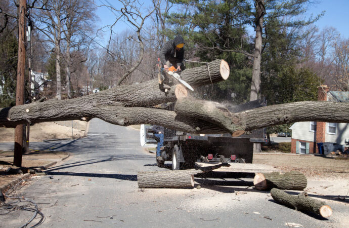 Residential Tree Services-Lithia FL Tree Trimming and Stump Grinding Services-We Offer Tree Trimming Services, Tree Removal, Tree Pruning, Tree Cutting, Residential and Commercial Tree Trimming Services, Storm Damage, Emergency Tree Removal, Land Clearing, Tree Companies, Tree Care Service, Stump Grinding, and we're the Best Tree Trimming Company Near You Guaranteed!