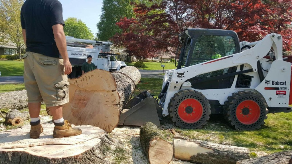 Services-Lithia FL Tree Trimming and Stump Grinding Services-We Offer Tree Trimming Services, Tree Removal, Tree Pruning, Tree Cutting, Residential and Commercial Tree Trimming Services, Storm Damage, Emergency Tree Removal, Land Clearing, Tree Companies, Tree Care Service, Stump Grinding, and we're the Best Tree Trimming Company Near You Guaranteed!