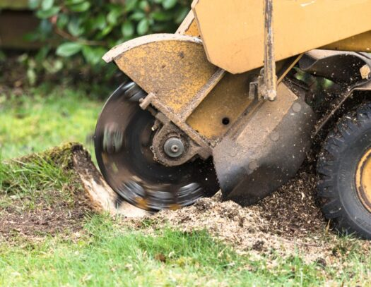 Stump Grinding-Lithia FL Tree Trimming and Stump Grinding Services-We Offer Tree Trimming Services, Tree Removal, Tree Pruning, Tree Cutting, Residential and Commercial Tree Trimming Services, Storm Damage, Emergency Tree Removal, Land Clearing, Tree Companies, Tree Care Service, Stump Grinding, and we're the Best Tree Trimming Company Near You Guaranteed!