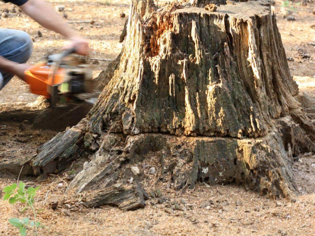 Stump Removal-Lithia FL Tree Trimming and Stump Grinding Services-We Offer Tree Trimming Services, Tree Removal, Tree Pruning, Tree Cutting, Residential and Commercial Tree Trimming Services, Storm Damage, Emergency Tree Removal, Land Clearing, Tree Companies, Tree Care Service, Stump Grinding, and we're the Best Tree Trimming Company Near You Guaranteed!