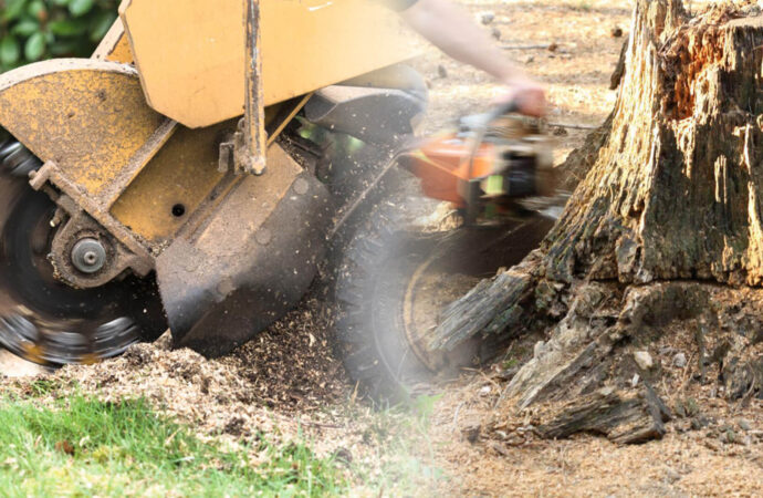 Stump grinding & removal-Lithia FL Tree Trimming and Stump Grinding Services-We Offer Tree Trimming Services, Tree Removal, Tree Pruning, Tree Cutting, Residential and Commercial Tree Trimming Services, Storm Damage, Emergency Tree Removal, Land Clearing, Tree Companies, Tree Care Service, Stump Grinding, and we're the Best Tree Trimming Company Near You Guaranteed!