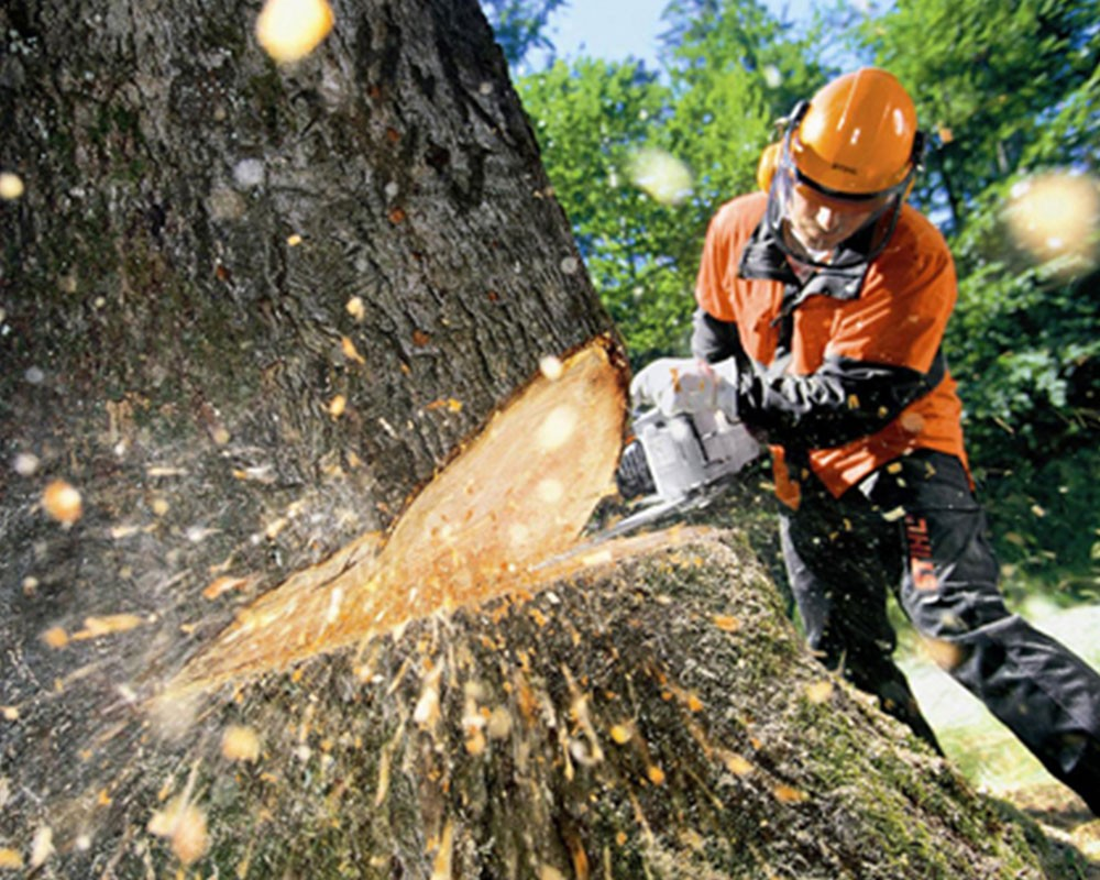 Tree Cutting-Lithia FL Tree Trimming and Stump Grinding Services-We Offer Tree Trimming Services, Tree Removal, Tree Pruning, Tree Cutting, Residential and Commercial Tree Trimming Services, Storm Damage, Emergency Tree Removal, Land Clearing, Tree Companies, Tree Care Service, Stump Grinding, and we're the Best Tree Trimming Company Near You Guaranteed!