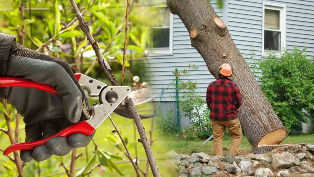 Tree pruning & tree removal-Lithia FL Tree Trimming and Stump Grinding Services-We Offer Tree Trimming Services, Tree Removal, Tree Pruning, Tree Cutting, Residential and Commercial Tree Trimming Services, Storm Damage, Emergency Tree Removal, Land Clearing, Tree Companies, Tree Care Service, Stump Grinding, and we're the Best Tree Trimming Company Near You Guaranteed!
